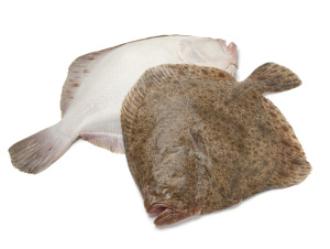 Pair of fresh Turbot fishes